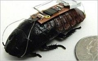 Биоботы и киборги насекомые
